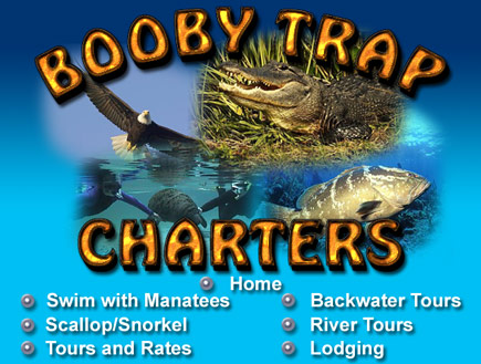 Homosassa Snorkeling, Homosassa Springs Diving, Scalloping tours, snorkel homosassa